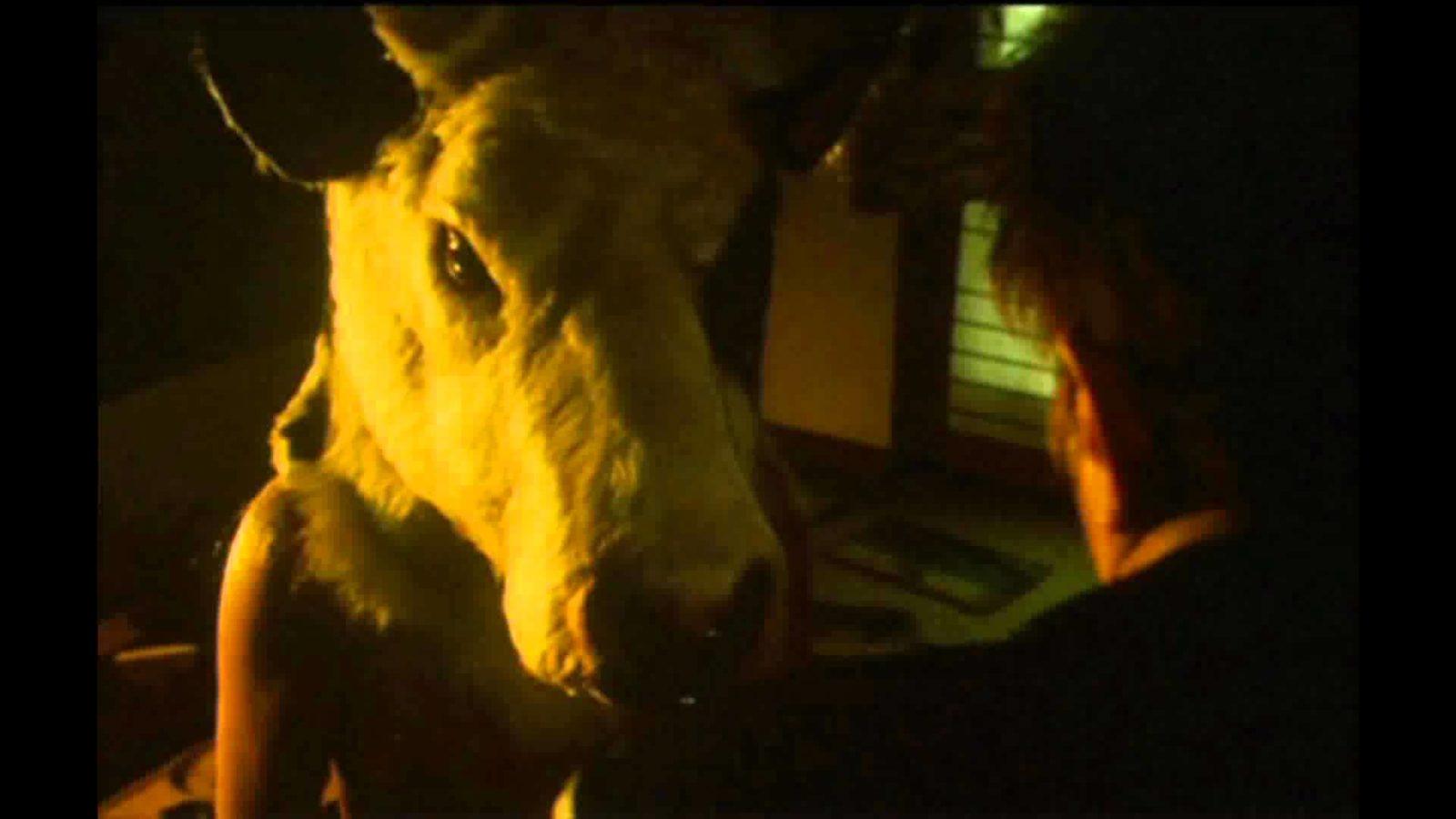 Коровья голова. Оригинал. Японская городская легенда-страшилка