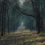 Без мира в душе да без молитвы в лес не ходи!