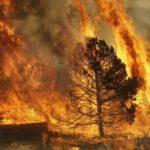 Монолог жены пожарника с ЧС